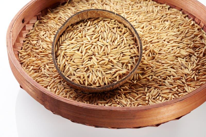 在椰子的稻 免版税图库摄影