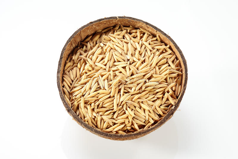 在椰子的稻 免版税库存图片