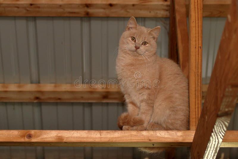 在椽木的猫 免版税库存照片