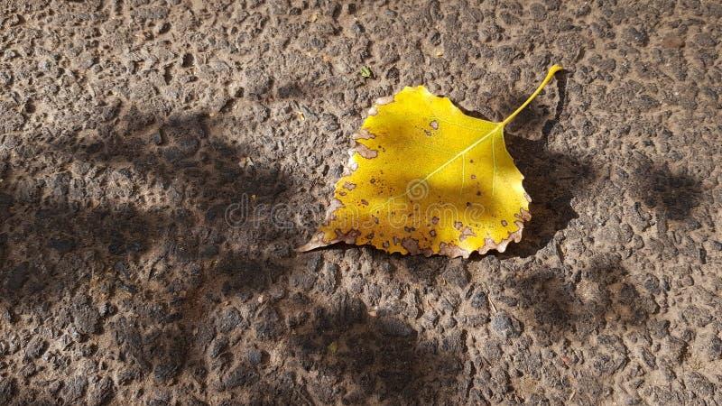 在概略的柏油路表面上面的唯一黄色叶子 免版税库存照片