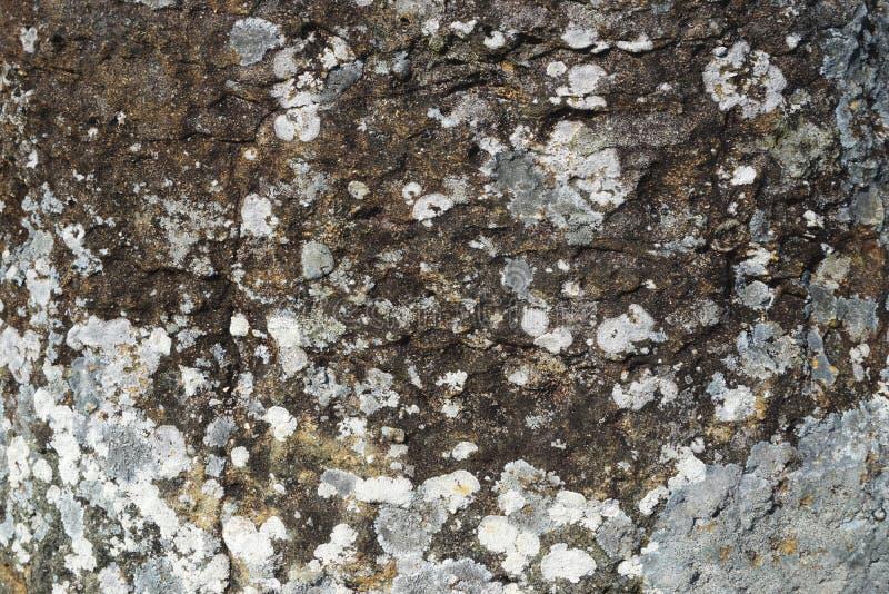 在概略的灰色石头摘要水平的自然背景纹理的地衣斑点 免版税库存照片