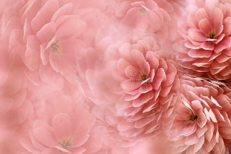 在模糊的红色背景的水彩花 菊花花查出在红色白色 花卉拼贴画 背景构成旋花植物空白花的郁金香 库存图片