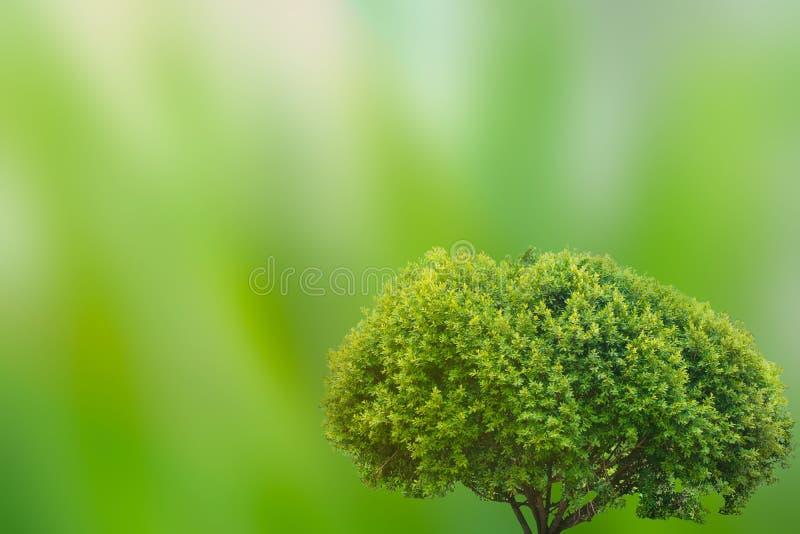 在模糊的绿色背景的美丽的大树与您的文本的拷贝空间 在除世界外的概念 免版税库存照片