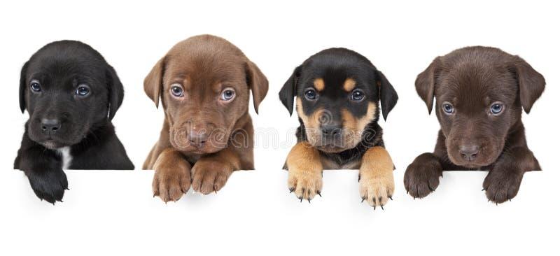 在横幅四小狗之上 免版税库存图片