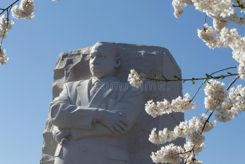 在樱花之间的MTK 免版税图库摄影
