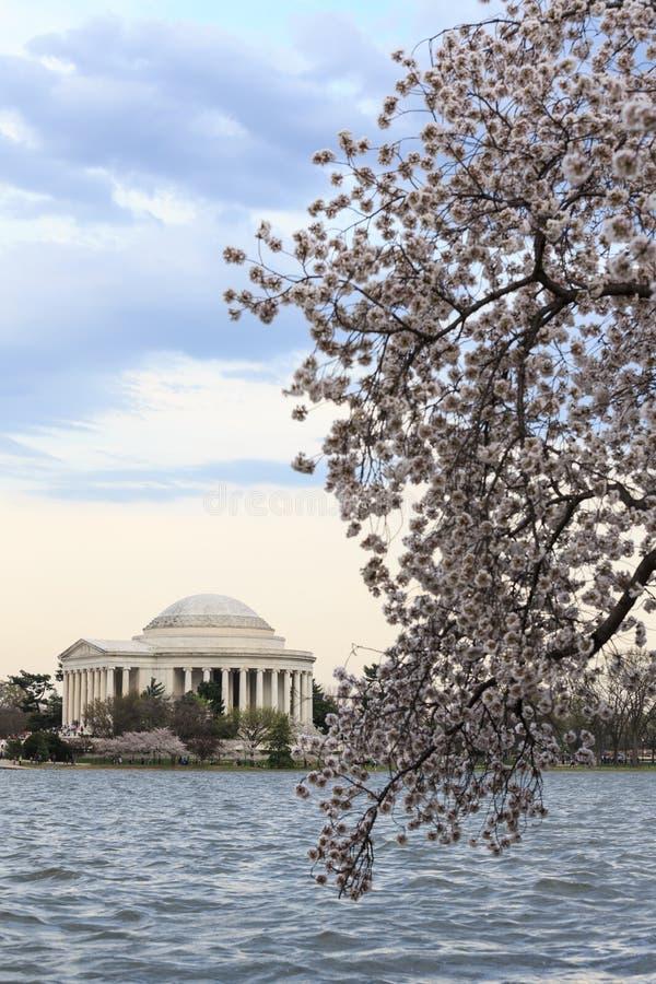 在樱花节日期间的托马斯・杰斐逊纪念品在spri 库存图片