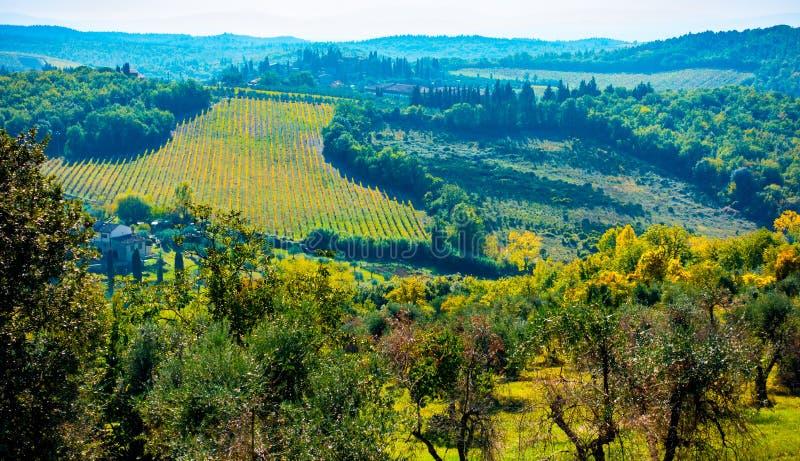 在橄榄树和葡萄园盖的小山的看法在圣多纳托,塔瓦尔内莱瓦尔迪佩萨,托斯卡纳,意大利附近 免版税图库摄影