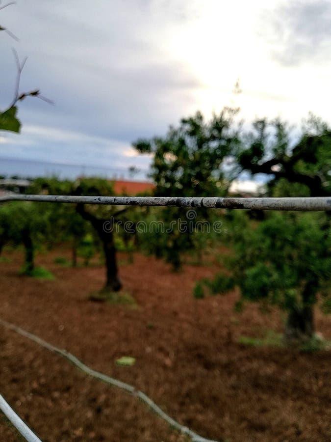 在橄榄树小树林附近的铁导线 免版税库存图片