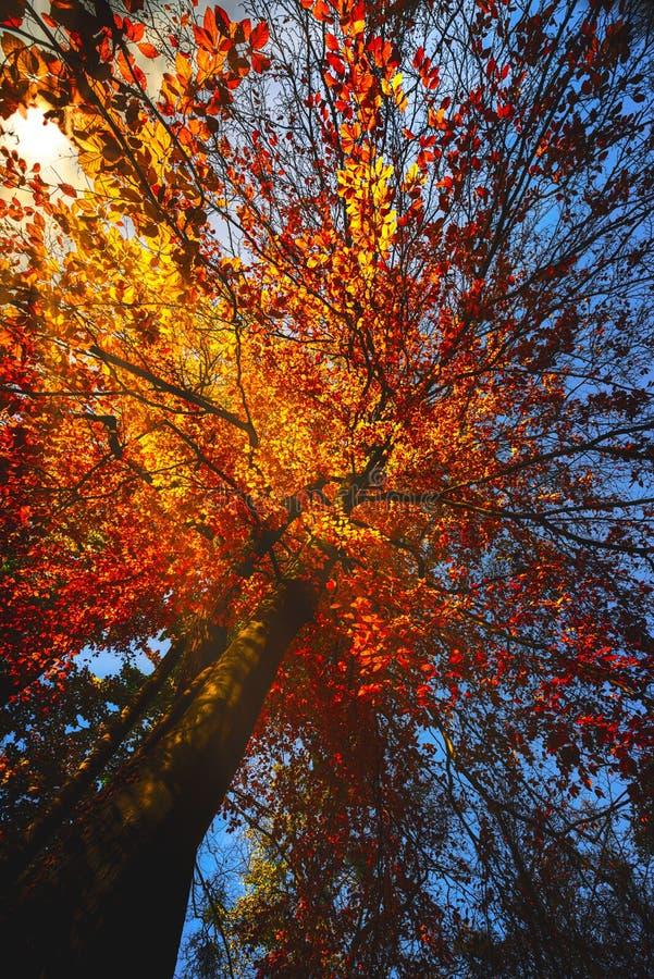 在橙色叶子下 免版税库存照片