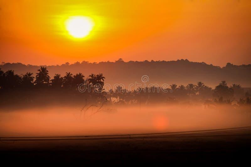 在橙色天空的大太阳盘在有薄雾的棕榈的日出
