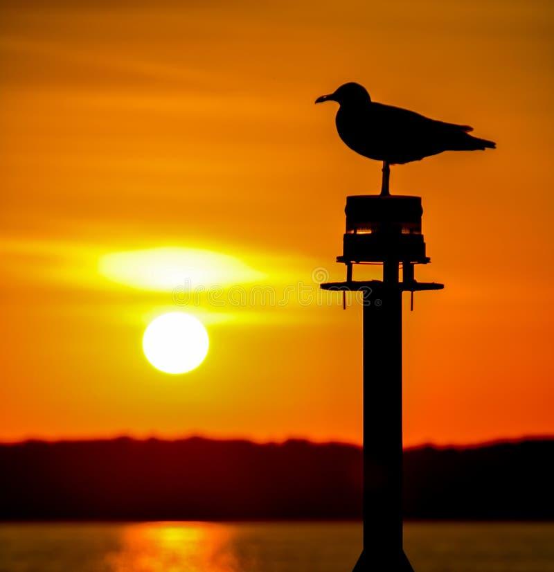 在橙色日落的海鸥剪影 库存图片