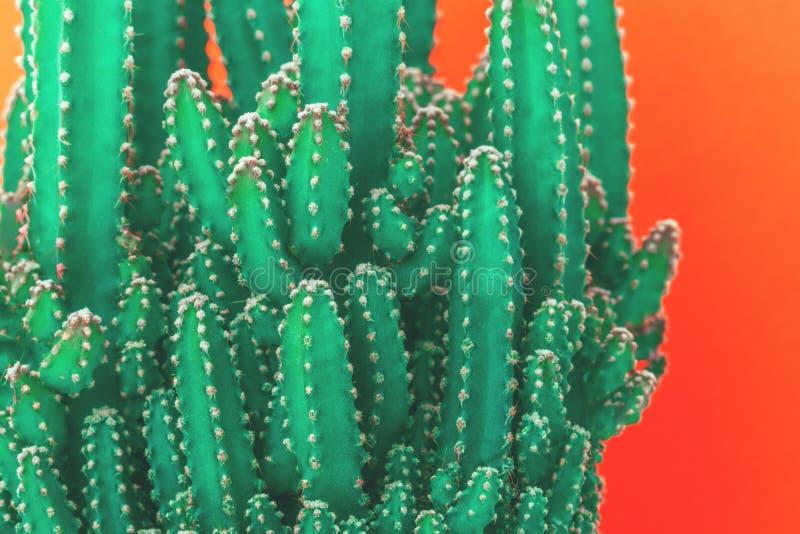 在橙色背景隔绝的被构造的仙人掌 免版税图库摄影