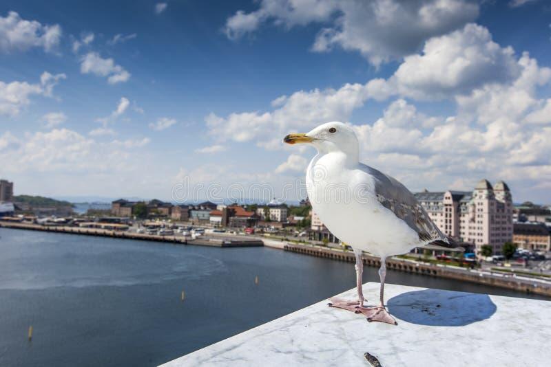 在歌剧院的海鸥在奥斯陆,挪威 免版税库存照片