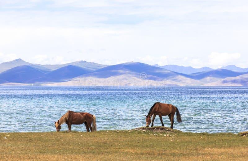 在歌曲KUL湖的马在吉尔吉斯斯坦 库存照片