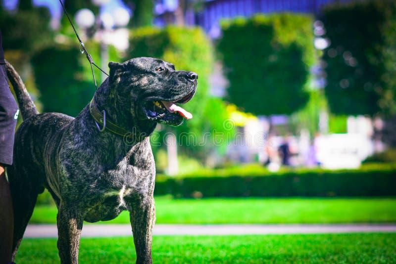 在步行期间的狗在公园 免版税库存照片