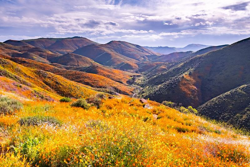 在步行者峡谷在superbloom期间,盖山谷和土坎,湖埃尔西诺的花菱草的风景, 免版税图库摄影