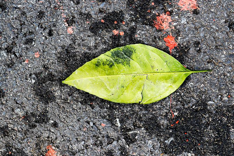 在步行途中的绿色leafe 免版税库存图片