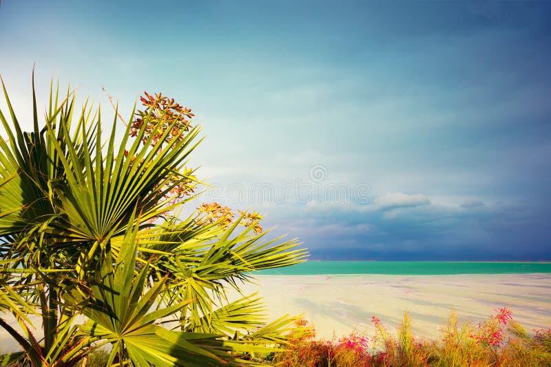 在死海岸的棕榈树 免版税库存图片