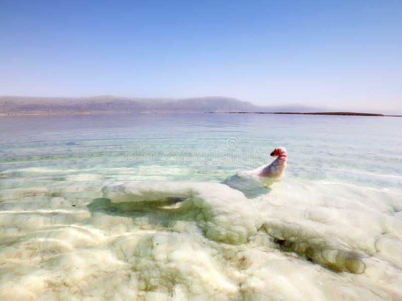 在死海的异常的盐形成在以色列 免版税库存图片