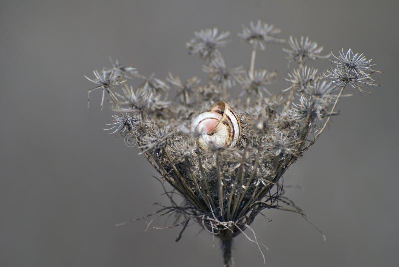 在死的秋天花的蜗牛 库存照片