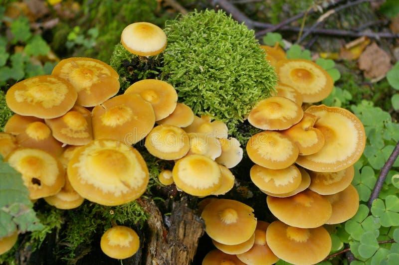在残余部分的蘑菇 免版税库存图片