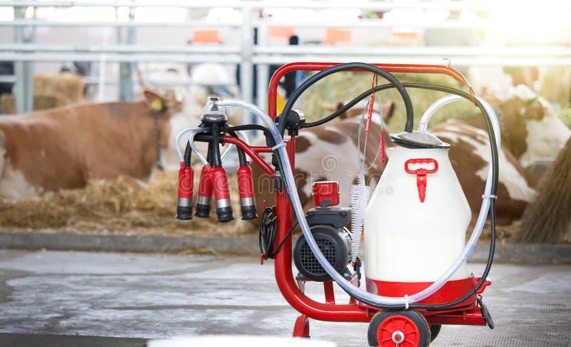 在母牛前面的挤奶机 免版税库存图片