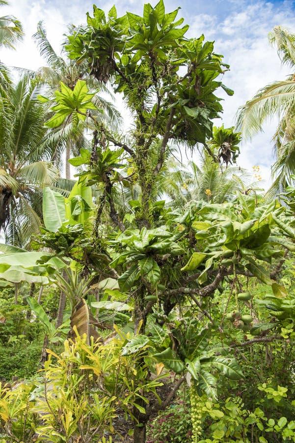 在比喻的大方植被,树 免版税库存照片