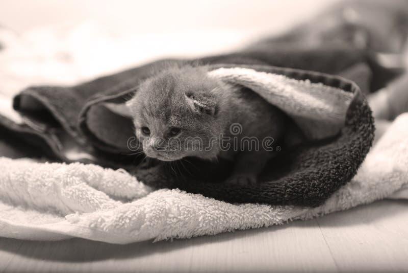 Download 在毛巾下的小小猫 库存照片. 图片 包括有 关心, 毛巾, 蓝色, 坚持, 舒适, 下面, 背包, 拥抱 - 72354026