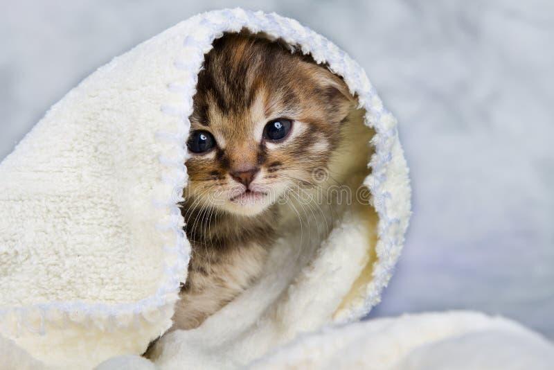 在毛巾关闭的小猫 免版税库存照片