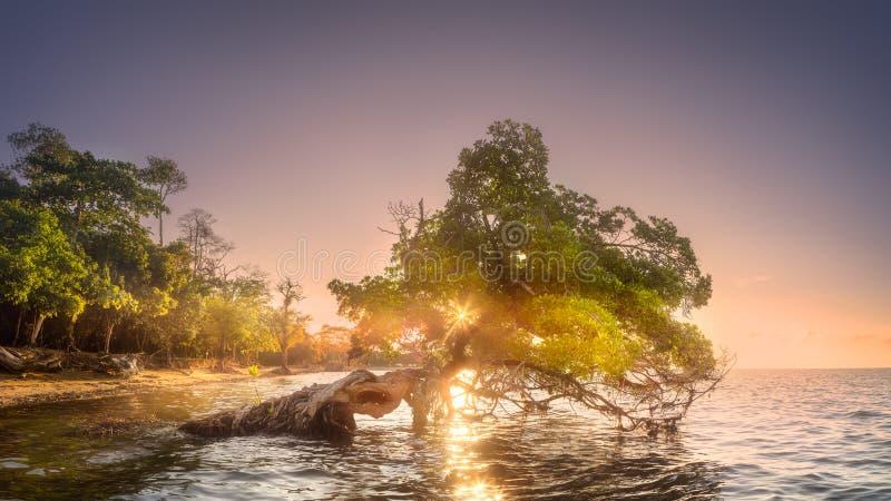 Download 在水下的婆罗洲的树和海岸靠岸 库存图片. 图片 包括有 夏威夷, 放松, 手段, 椰子, 海洋, 系列 - 111138721