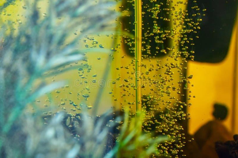 在水下的氧气泡影在水族馆 库存照片