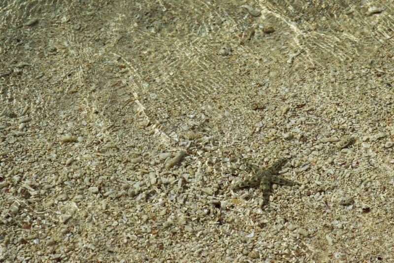 在水下的海星在海滩附近 免版税图库摄影