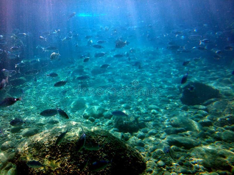 在水下的鱼在蓝色海 免版税图库摄影