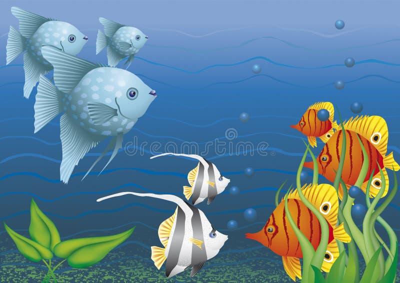 在水之下的五颜六色的鱼 向量例证