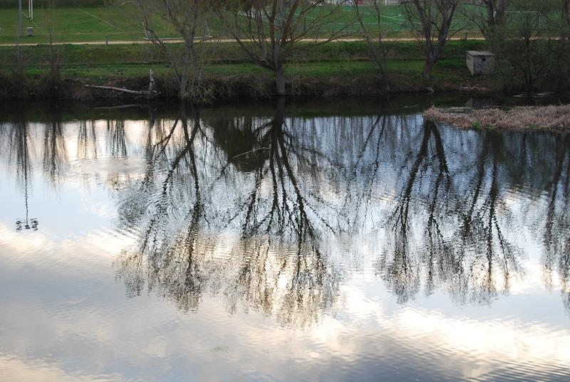 在水反映的结构树 图库摄影