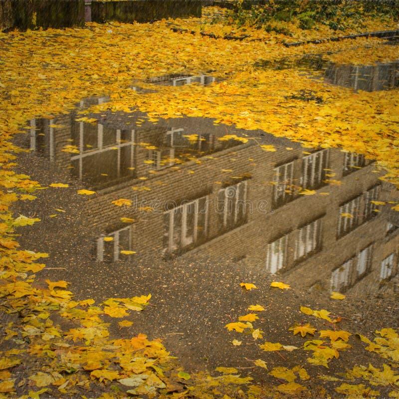 在水坑水反射场面的秋叶 免版税图库摄影