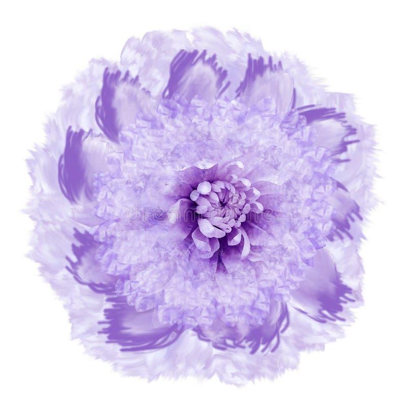 在水彩样式的抽象桃红色紫罗兰色花 在与裁减路线的白色背景隔绝的花 特写镜头 对设计,文本 库存例证