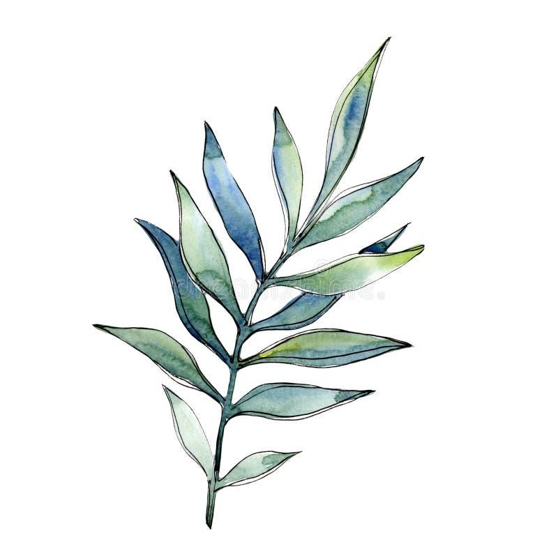 在水彩样式的热带绿色lesves被隔绝的 库存例证