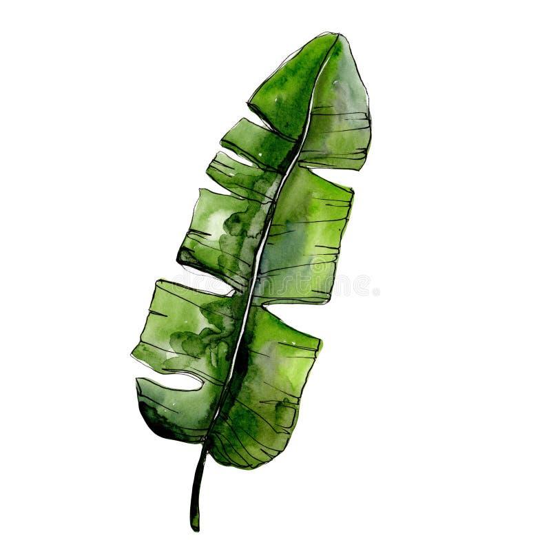 在水彩样式的热带绿色lesves被隔绝的 向量例证