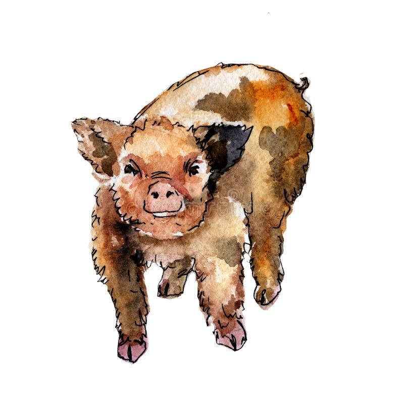 动物的全名:猪 背景,纹理,封皮样式或者纹身花刺的水彩画野生动物图片