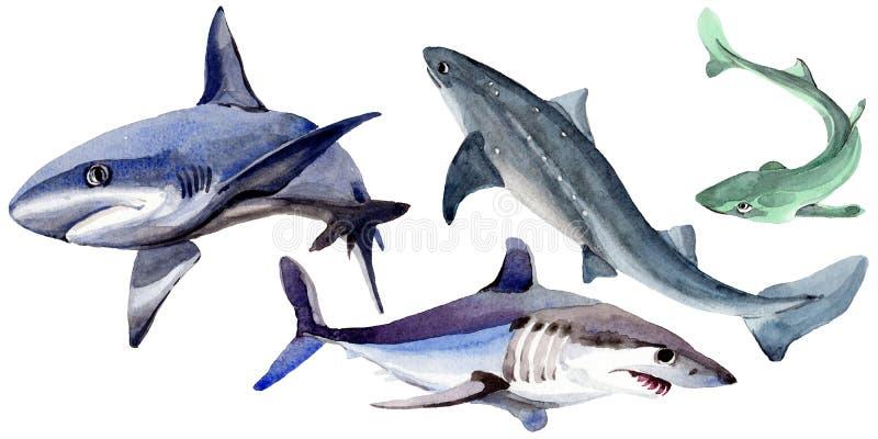 在水彩样式的鲨鱼野生鱼被隔绝的图片