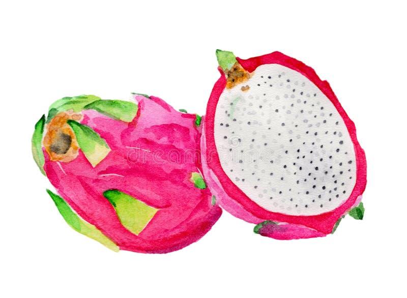 在水彩绘的新鲜水果 库存图片