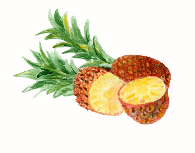 在水彩绘的新鲜水果 免版税图库摄影