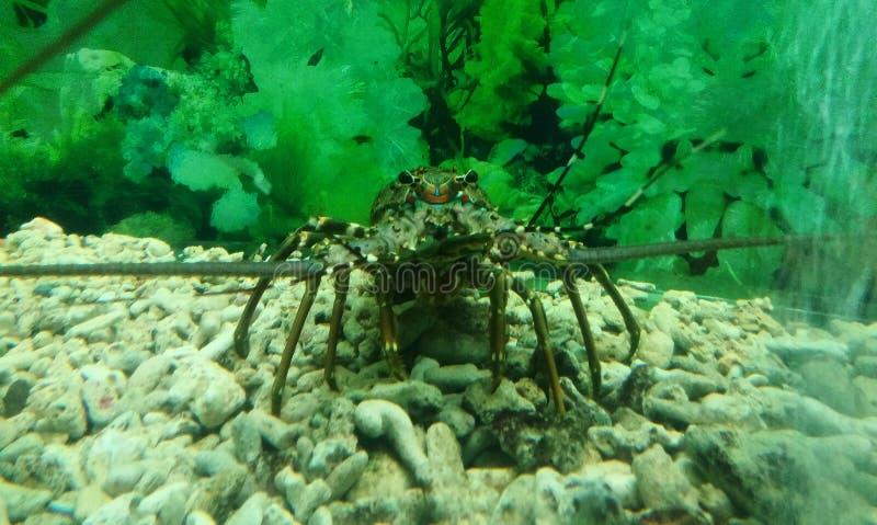 在水族馆的螃蟹 水生螃蟹特写镜头 储蓄自由 库存图片
