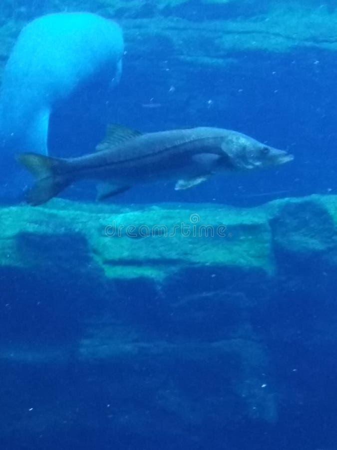 在水族馆的闻鱼 免版税图库摄影