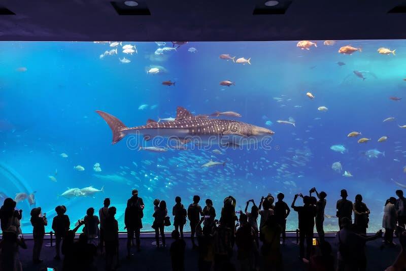 在水族馆的鱼在冲绳岛市 库存照片