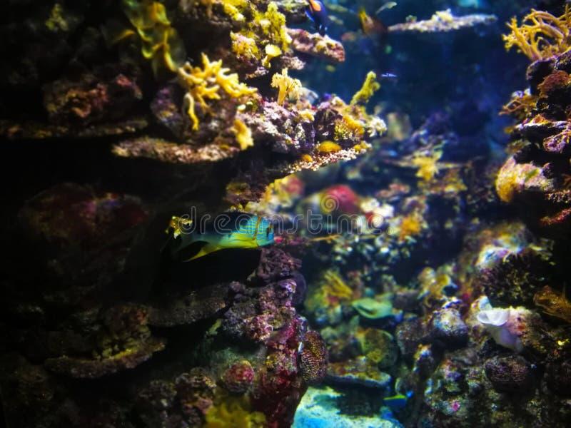 在水族馆的Unterwater世界在巴塞罗那 图库摄影