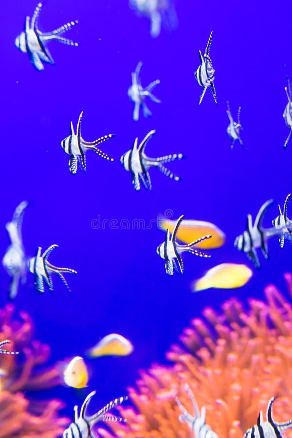 在水族馆,软的焦点的热带鱼 免版税库存图片