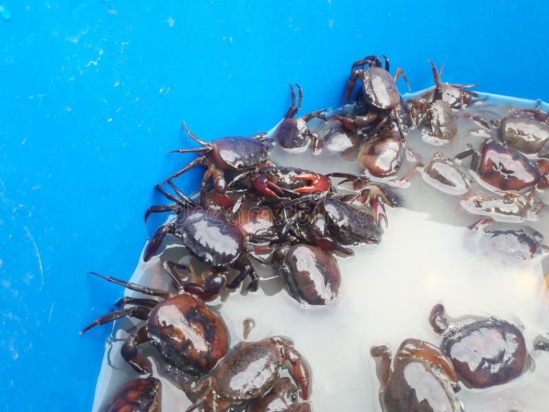 在水池的领域螃蟹 库存照片