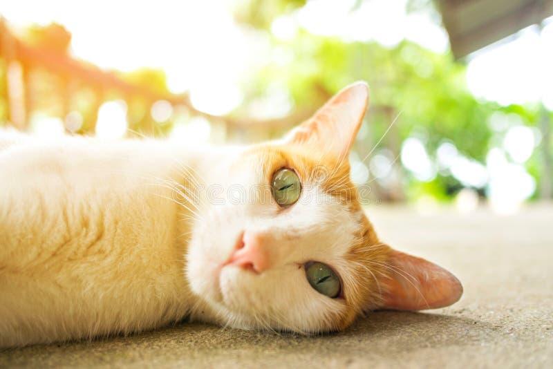 在水泥地板上的猫laydown 免版税图库摄影
